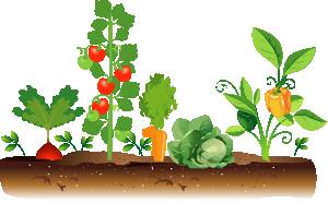 Fillmore County Fair Open Class Vegetable Gardening 2